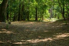 Bomen in het bos royalty-vrije stock afbeeldingen