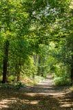 Bomen in het bos stock afbeelding