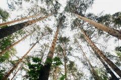 Bomen in het bos Royalty-vrije Stock Foto's