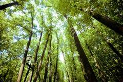 Bomen in het bos - de kroon van bladeren tegen de hemel Royalty-vrije Stock Foto