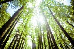 Bomen in het bos - de kroon van bladeren tegen de hemel Royalty-vrije Stock Fotografie