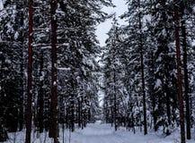 Bomen in het bos - Lapland royalty-vrije stock afbeeldingen