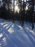 Bomen in het bos onder de sneeuwwinter Natuurlijke mooie achtergrond met berijpte bomen in de winter Stock Foto