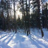 Bomen in het bos onder de sneeuwwinter Natuurlijke mooie achtergrond met berijpte bomen in de winter Royalty-vrije Stock Afbeeldingen