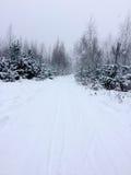 Bomen in het bos onder de sneeuwwinter Natuurlijke mooie achtergrond met berijpte bomen in de winter Stock Foto's
