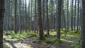 Bomen in het Bos in Zuid-Polen Stock Foto's