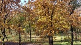 Bomen in het de herfstpark stock video