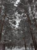 Bomen in het de winterbos royalty-vrije stock afbeelding