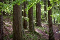 Bomen in het hout Royalty-vrije Stock Fotografie