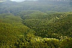 Bomen in het hout Royalty-vrije Stock Foto