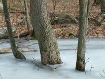 Bomen in het ijs royalty-vrije stock afbeeldingen