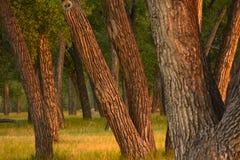 Bomen in het Licht van de de Zomerochtend royalty-vrije stock foto's