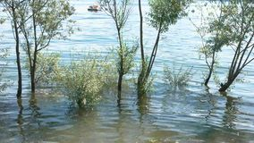 Bomen in het meer stock footage