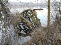 Bomen in het meer Stock Afbeeldingen