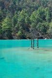 Bomen in het meer Royalty-vrije Stock Afbeeldingen