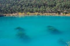 Bomen in het meer Royalty-vrije Stock Foto