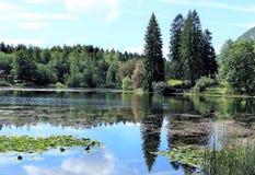 Bomen het meer worden overdacht dat royalty-vrije stock afbeeldingen
