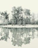 Bomen in het meer worden weerspiegeld dat Stock Foto