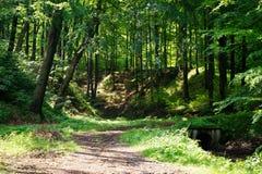 Bomen in het midden van de bos, humeurige donkere scène van de schoonheid van aard Royalty-vrije Stock Fotografie