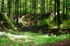 Bomen in het midden van de bos, humeurige donkere scène van de schoonheid van aard Stock Afbeelding