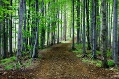 Bomen in het midden van de bos, humeurige donkere scène van de schoonheid van aard Royalty-vrije Stock Afbeeldingen