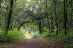 Bomen in het midden van de bos, humeurige donkere scène van de schoonheid van aard Stock Afbeeldingen