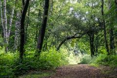 Bomen in het midden van de bos, humeurige donkere scène van de schoonheid van aard Royalty-vrije Stock Foto's