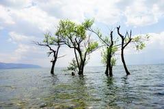 Bomen in het overzees royalty-vrije stock fotografie