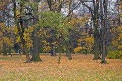 bomen in het park Åazienkowski stock foto's