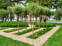 Bomen in het park Royalty-vrije Stock Afbeelding