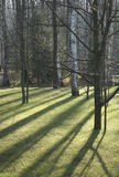 Bomen in het park Royalty-vrije Stock Foto's