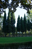 Bomen in het park stock foto