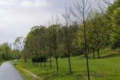 Bomen in het park Stock Afbeelding