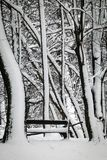Bomen in het park en een bank met sneeuw wordt behandeld die Stock Fotografie