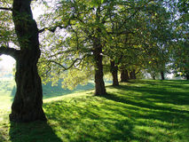 Bomen in het Park van Greenwich Stock Foto's