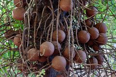Bomen in het park worden geplant dat stock afbeelding