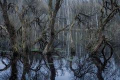 bomen in het water, moeras, bezinning, de herfstbos stock afbeeldingen