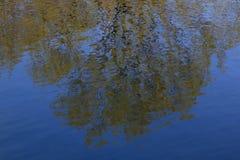 Bomen in het water worden weerspiegeld dat stock afbeelding