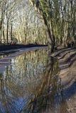 Bomen in het water worden weerspiegeld dat Royalty-vrije Stock Afbeelding