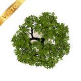 Bomen hoogste mening voor landschaps vectorillustratie Stock Foto