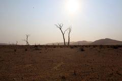 Bomen in Horizon Stock Afbeelding