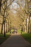 Bomen in Hyde Park royalty-vrije stock foto's