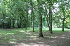 Bomen I n Dartmoor Stock Foto