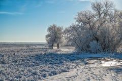 Bomen in ijs en sneeuw worden behandeld die Stock Afbeelding