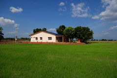 Bomen, landbouwbedrijfhuis, padiegebied stock afbeelding