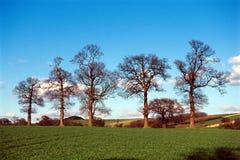 Bomen in landbouwgrondlandschap. stock foto