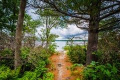 Bomen langs de kust van Massabesic-Meer, in Kastanjebruine, Nieuwe Hampshi Stock Fotografie