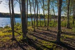 Bomen langs de Oever Stock Foto's