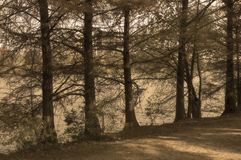 Bomen langs de rivierbank Stock Foto