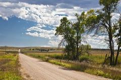 Bomen langs een landweg Stock Fotografie